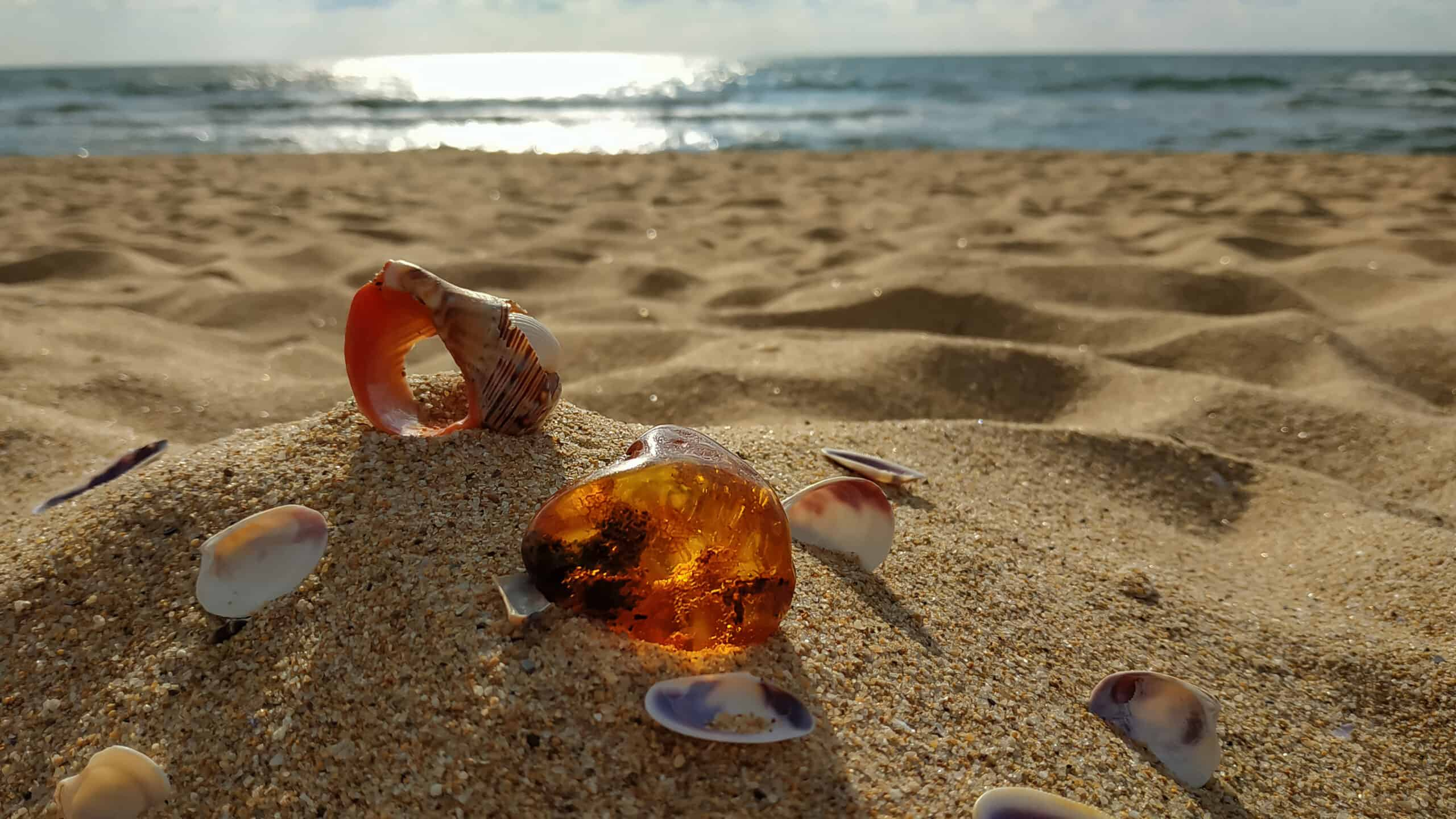A,Piece,Of,Natural,Raw,Amber,And,Shells,,Large,And